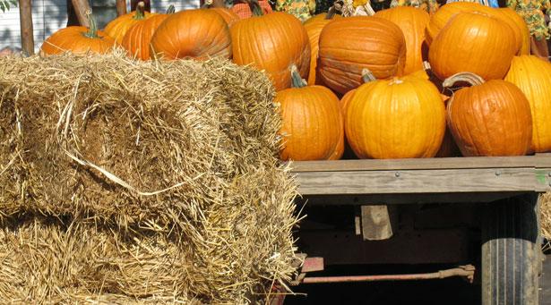 Pumpkins & Hay