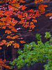 Zion-autumn